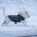 Thumbnail for Winter Safety for Pets